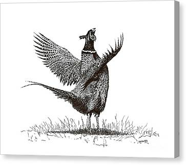 Pen And Ink Drawing Of Pheasant In Black And White Canvas Print by Mario Perez