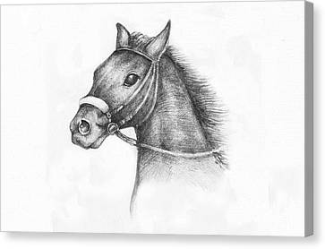 Pencil Drawing Of A Horse Canvas Print by Kiril Stanchev