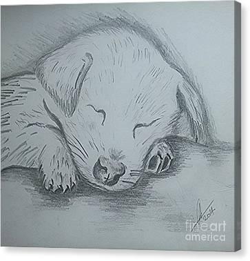 Pencil Puppy Canvas Print by Collin A Clarke