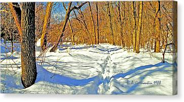 Canvas Print featuring the photograph Pennsylvania Forest In Winter by A Gurmankin