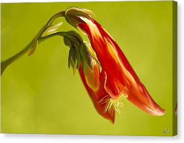 Penstemon Canvas Print by Angela A Stanton