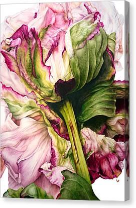 Peony II Canvas Print by Marie Burke