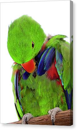 Perfect Bird Canvas Print by Crystal Wightman