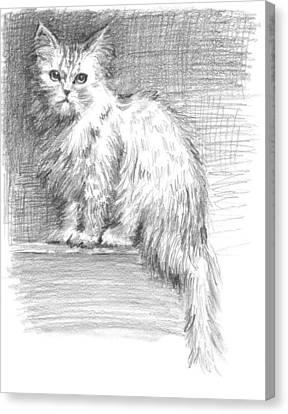 Persian Cat Canvas Print by Sarah Parks
