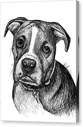 Pet Portraits Boxer Canvas Print by Heidi Creed