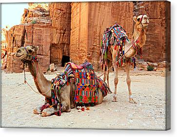 Petra Camels Canvas Print by Stephen Stookey