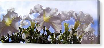 Petunia Sky Canvas Print by Janice Westerberg