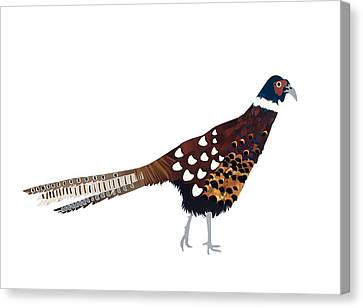 Pheasant Canvas Print by Isobel Barber