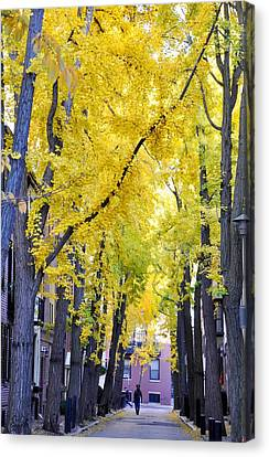 Philly In The Fall Canvas Print by Andrew Dinh