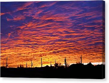 Phoenix Sunrise Canvas Print by Jill Reger
