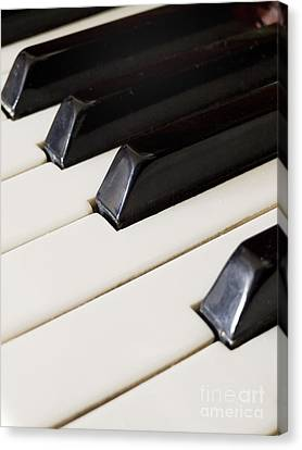 Piano Keys Canvas Print by Jelena Jovanovic