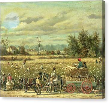 Picking Cotton Canvas Print by William Aiken Walker