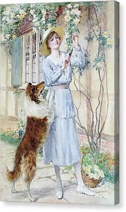 Picking Roses Canvas Print by William Henry Margetson