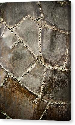 Pieces Canvas Print by Colleen Kammerer