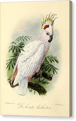 Pied Cockatoo Canvas Print by J G Keulemans