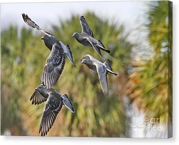 Pigeon Brigade Canvas Print by Deborah Benoit