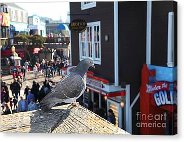 Pigeon Enjoying Pier 39 In San Francisco California 5d26131 Canvas Print by Wingsdomain Art and Photography