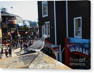 Pigeon Enjoying Pier 39 In San Francisco California 5d26132 Canvas Print by Wingsdomain Art and Photography