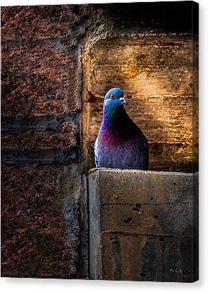 Pigeon Of The City Canvas Print by Bob Orsillo