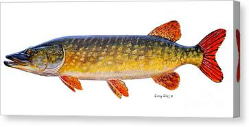 Pike Canvas Print by Carey Chen