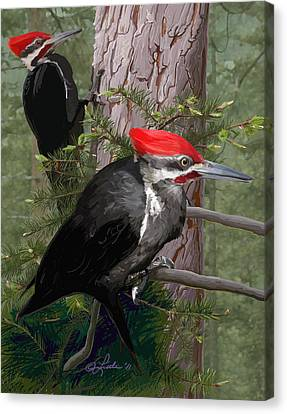 Pileated Woodpeckers Canvas Print by Pam Little