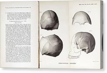 Piltdown Man Skull And Paper Canvas Print by Paul D Stewart
