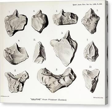 Piltdown Man Stone Tools Canvas Print by Paul D Stewart