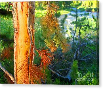 Pine By The River Canvas Print by John Kreiter