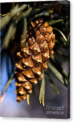 Pine Cone Close Up Canvas Print by Terry Elniski