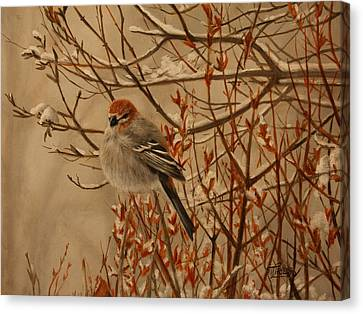 Pine Grosbeak Canvas Print by Tammy  Taylor