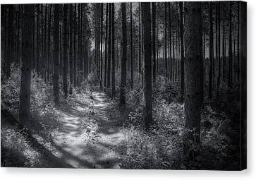 Pine Grove Canvas Print by Scott Norris