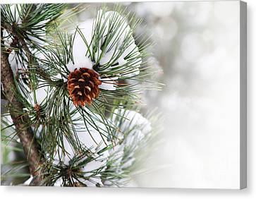 Pine Tree Canvas Print by Jelena Jovanovic