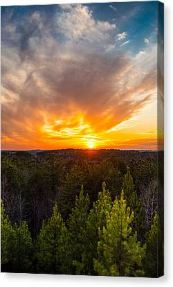 Pine Trees At Sunset Canvas Print by Parker Cunningham