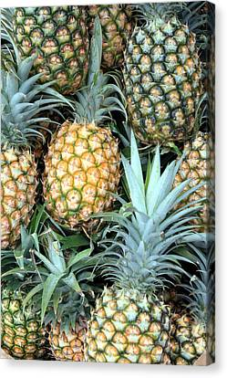 Pineapple Paradise Canvas Print by Karen Nicholson