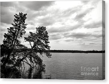 Pinelands Memories Canvas Print by Olivier Le Queinec