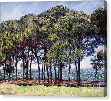 Pines Canvas Print by Claude Monet