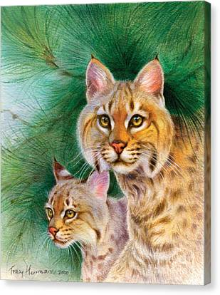 Pinewoods Bobcat Canvas Print by Tracy Herrmann