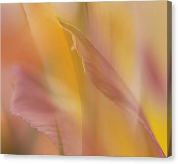 Pink Alstromeria-2 Canvas Print by Lyn  Perry