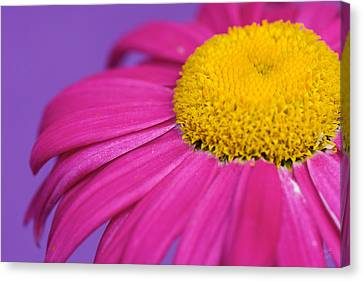 Pink And Purple Smile Canvas Print by Lisa Knechtel