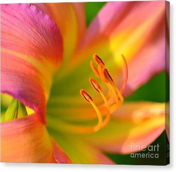 Pink And Yellow Canvas Print by Kathleen Struckle