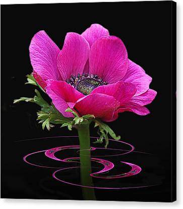 Pink Anemone Whirl Canvas Print by Gill Billington