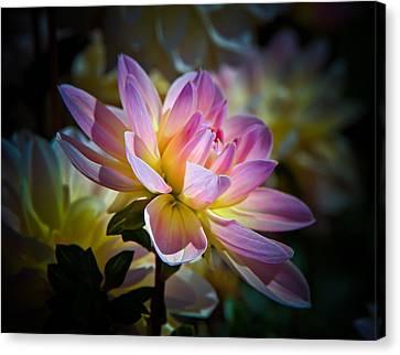 Pink Blossom  Canvas Print by Athena Mckinzie