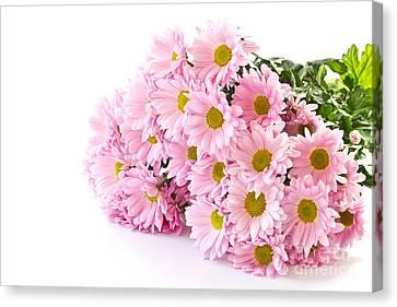 Pink Chrysanthemum Prints Canvas Print by Boon Mee