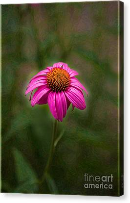Pink Echinacea Digital Flower Photo.painting Composite Artwork By Omaste Witkowski Canvas Print by Omaste Witkowski