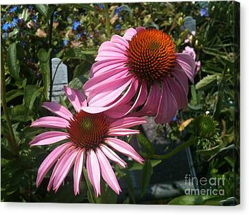 Pink Flowers Canvas Print by Amber Beach