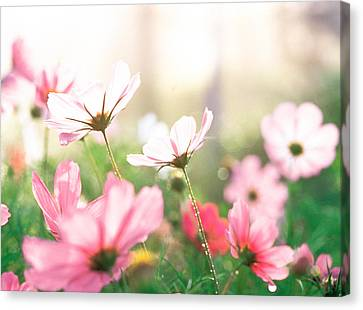 Pink Flowers In Meadow Canvas Print by Panoramic Images