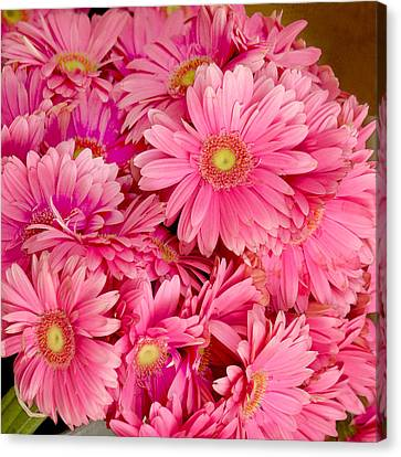 Pink Gerbera Daisies Canvas Print by Art Block Collections