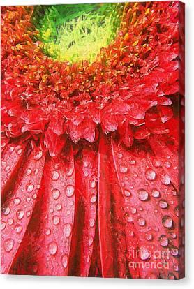 Pink Gerbera Flower Canvas Print by Odon Czintos