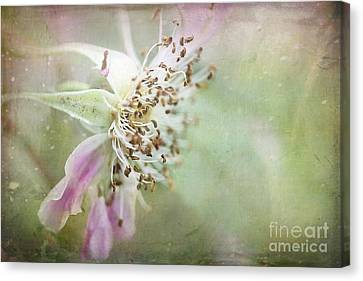 Pink Impression Canvas Print by Teresa Zieba