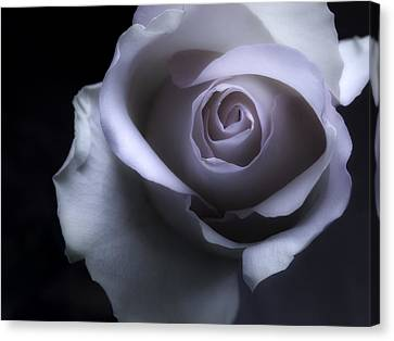 Black And White Rose Flower Macro Photography Canvas Print by Artecco Fine Art Photography